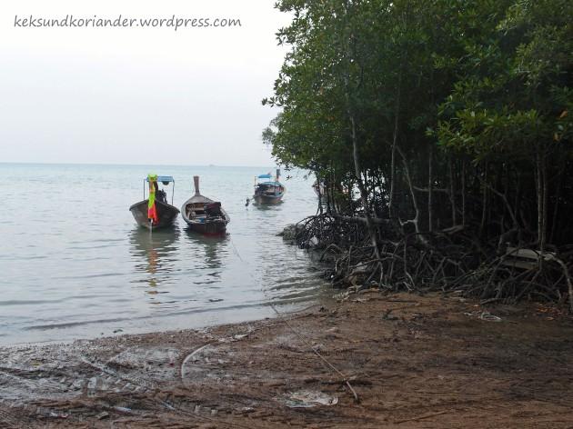 Mangroven Rai Leh Krabi Thailand