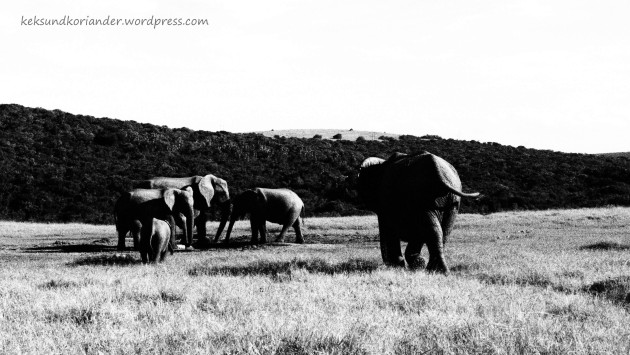 Addo Elephant National Park Südafrika