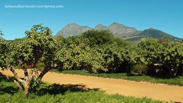 Winelands Oliven Garden Route Südafrika