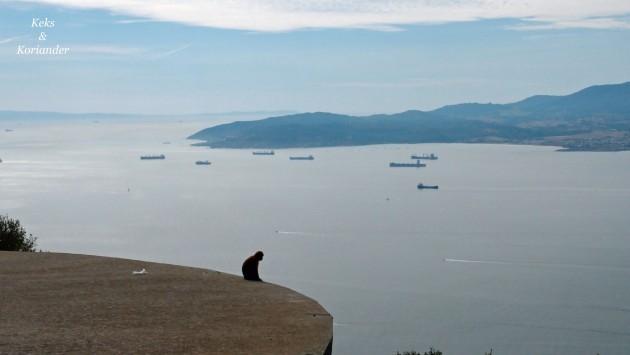 Berberaffe Gibraltar Fels Meer