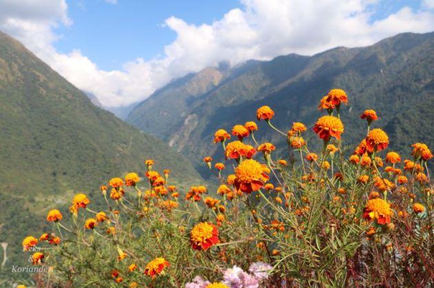 himalaya-nepal-blumen-aussicht