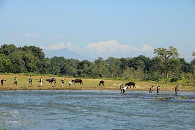 nepal-steppe-chitwan-nationalpark-himalaya