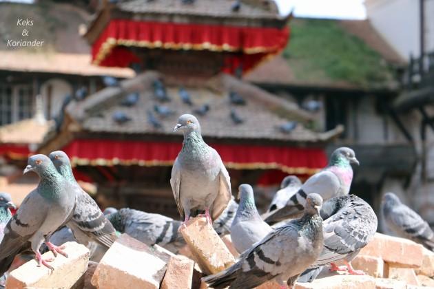 Kathmandu Nepal Tauben Tempel Wiederaufbau.jpg